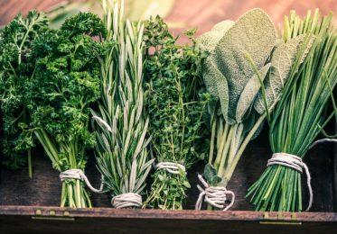 Как сохранить зелень свежей надолго